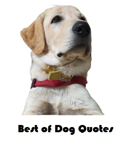 Best Of Dog Quotes